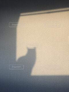 朝のネコの影の写真・画像素材[2172492]