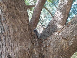 大木の小さな住人の写真・画像素材[2172828]