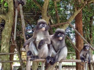 仲良し猿の写真・画像素材[2173281]
