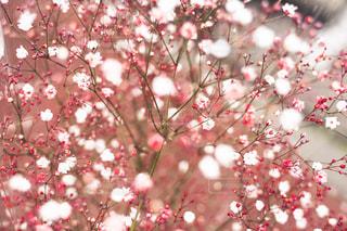 染め花 かすみ草の写真・画像素材[2247674]