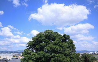 空と樹木の写真・画像素材[2212116]