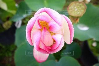 花のクローズアップの写真・画像素材[2291335]