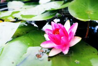 池のクローズアップの写真・画像素材[2291361]