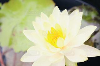 花のクローズアップの写真・画像素材[2291363]