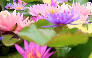 花のクローズアップの写真・画像素材[2291367]