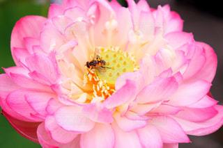 花と蜂のクローズアップの写真・画像素材[2291368]