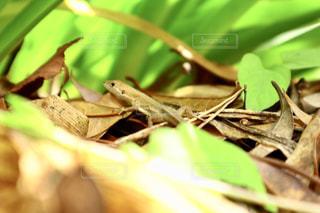 枝の上に座っているとかげの写真・画像素材[2386656]