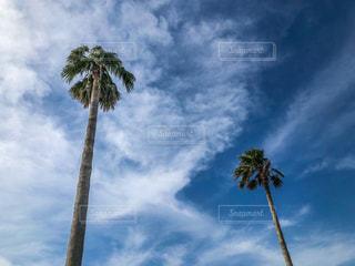 ヤシの木と曇った青空のグループの写真・画像素材[2174525]
