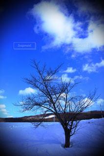 青空と小木の写真・画像素材[2179737]