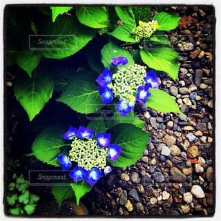 FLOWERの写真・画像素材[2208714]