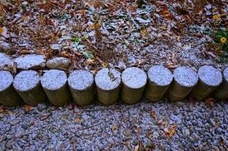 Snowyの写真・画像素材[2786620]