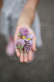 花を持っている手の写真・画像素材[2175154]