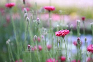花のクローズアップの写真・画像素材[2176634]