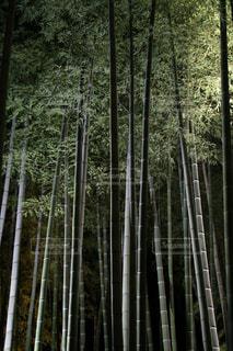 夜の竹林の写真・画像素材[2179595]