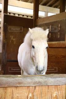 白馬の写真・画像素材[2703102]