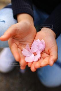 小さな花びらを持つ手の写真・画像素材[3138851]