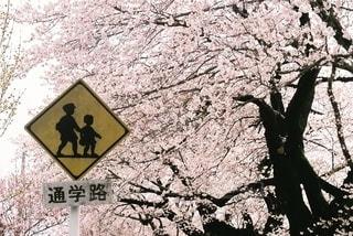 青春の花道の写真・画像素材[2638074]