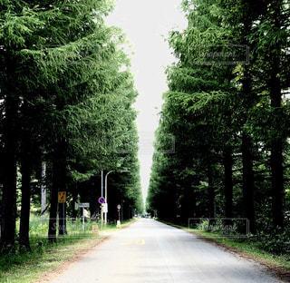 道の脇に木がある小道の写真・画像素材[2175416]