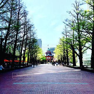 道の脇に木がある小道の写真・画像素材[2175586]