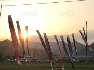 田舎の夕日に佇む鯉のぼりの写真・画像素材[2175720]
