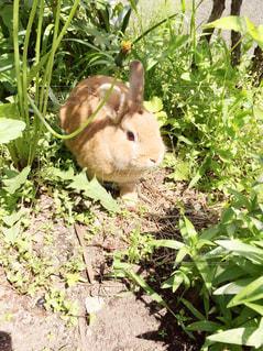 庭の小さな動物の写真・画像素材[2178359]