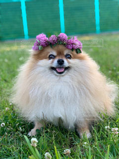 花と犬の写真・画像素材[2178182]
