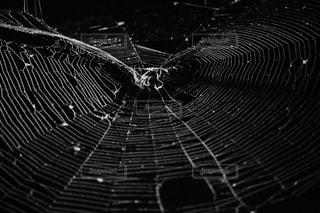 蜘蛛の巣の写真・画像素材[2209368]