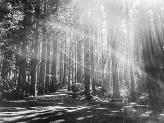 木漏れ日。の写真・画像素材[2177881]