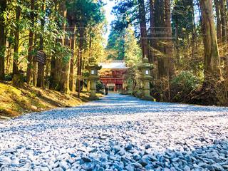 御岩神社の写真・画像素材[2177915]