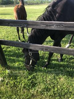 塀の横に立っている茶色の馬の写真・画像素材[2177728]