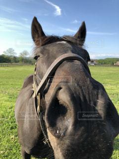 野原に立っている黒い馬の接写の写真・画像素材[2177733]