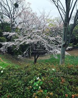 庭にある大きな木の写真・画像素材[2180216]