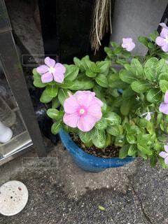 植木鉢のクローズアップの写真・画像素材[3735330]