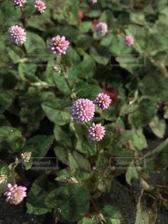 夜の花の写真・画像素材[3771896]