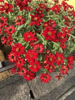 花のクローズアップの写真・画像素材[3805741]