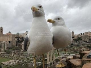 鳥の接写の写真・画像素材[2179401]