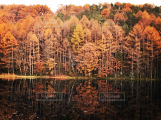 自然の写真・画像素材[253140]