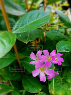 可愛い花の写真・画像素材[2184239]