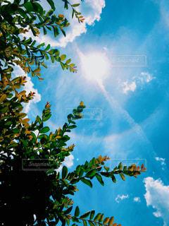 晴れた日の木の写真・画像素材[2231727]