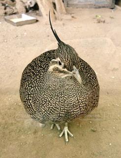 丸い鳥の写真・画像素材[2500919]
