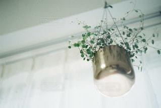 下から見上げたワイヤープランツの写真・画像素材[2192748]