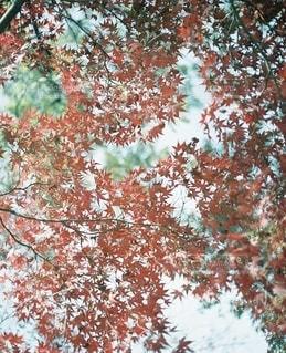 紅葉の写真・画像素材[2784965]