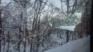 雪に覆われた木の写真・画像素材[2181631]