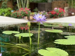 池の接写の写真・画像素材[2181956]
