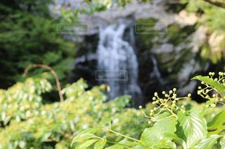 緑の葉のある木の写真・画像素材[2181992]