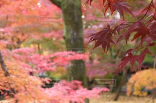 森の中の植物の写真・画像素材[2181998]