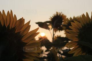 花のクローズアップの写真・画像素材[2354265]