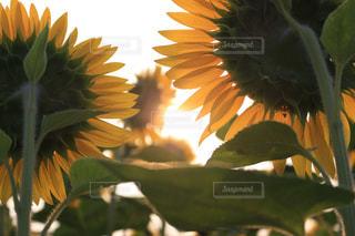 花のクローズアップの写真・画像素材[2354266]