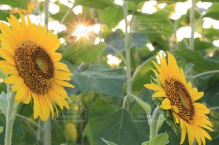 花のクローズアップの写真・画像素材[2354267]