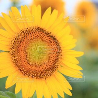 花のクローズアップの写真・画像素材[2354268]